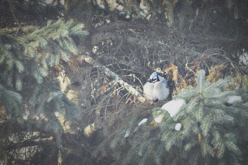 bluebird 2 low res