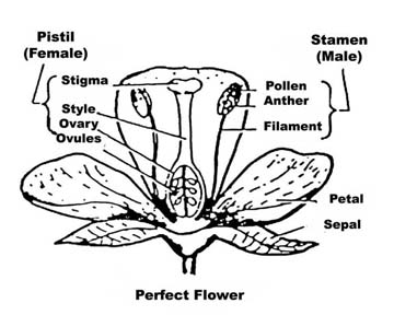 Perfect Flower copy